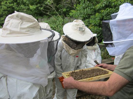 miel-apiculture-paris-whereez-ruche-abeille-enfant.png